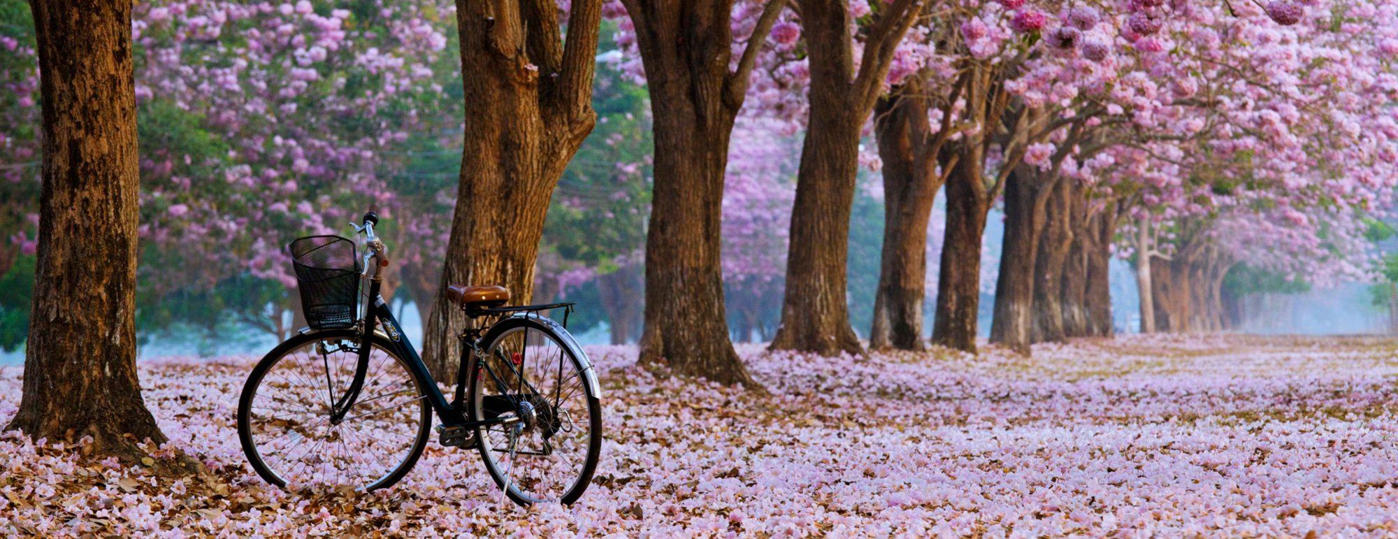 DEBO-Bikes